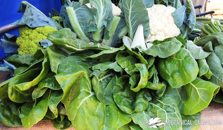 verduras de hoja verde en un mercado