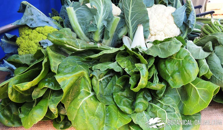 hojas verdes verduras