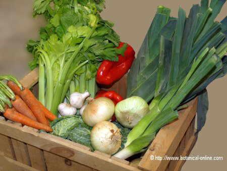 Verduras y hortalizas de cultivo biológico