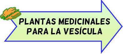 plantas medicinales para la vesícula