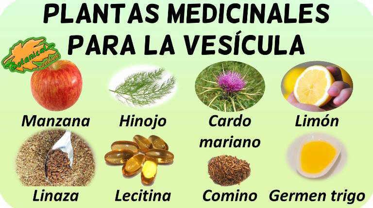 plantas medicinales para la vesicula remedios