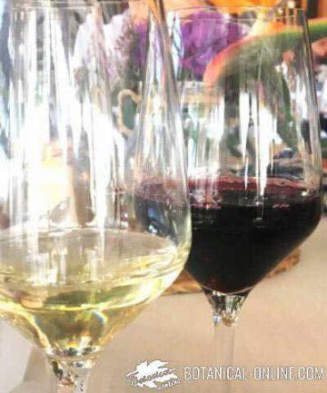 copas de vino blanco y vino tinto
