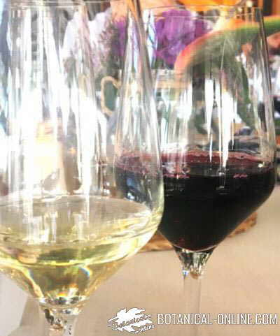 vino tinto resveratrol