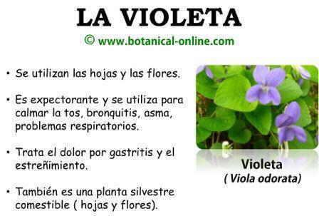 Plantas Medicinales Con Sus Nombres Y Usos Imagui