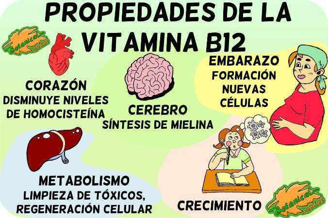 vitamina b12 funciones propiedades