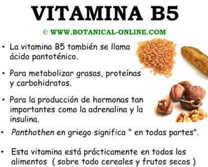 Propiedades del ácido pantoténico, vitamina B5