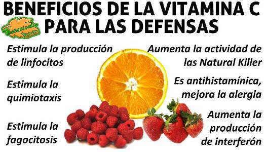 vitamina c para aumentar las defensas y el sistema inmunitario