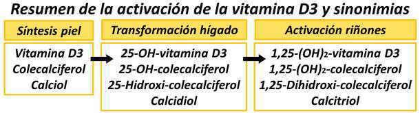 vitamina D metabolismo sintesis sustancia molecula