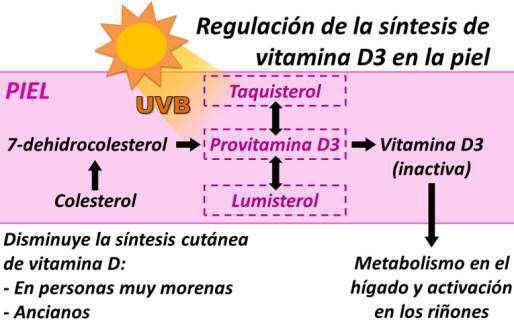 regulacion sintesis cutanea en la piel de vitamina D