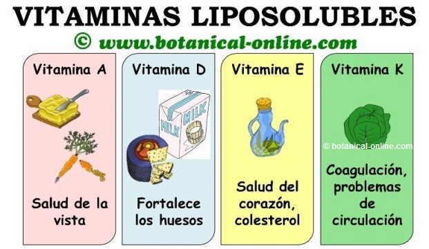 Vitaminas liposolubles A D E K, beneficios, funciones, propiedades y alimentos
