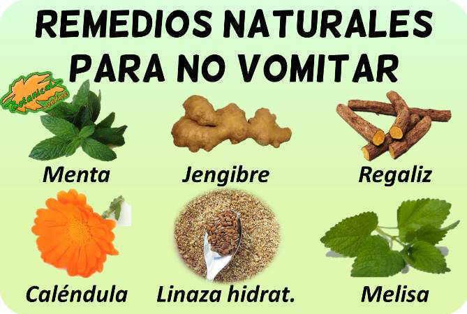 vomitos plantas medicinales remedios suplementos tratamiento natural