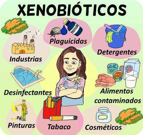 xenobioticos ejemplos