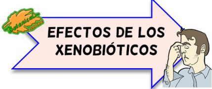 toxicidad de los xenobioticos