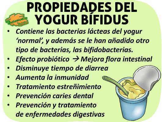 Propiedades medicinales del yogur bifidus bifidobacterium