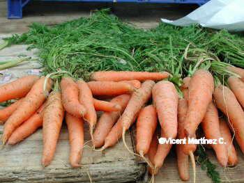 Propietats de les pastanagues