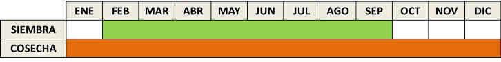 Calendario de cultivo de la zanahoria