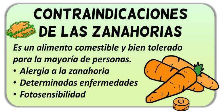 contraindicaciones de la zanahoria