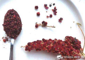 zumaque especia semilllas fruto